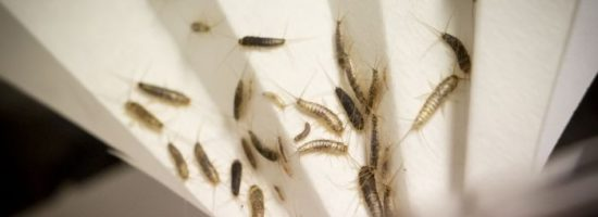 NON-HARMFUL INSECTS IN HOUSE